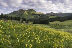 Supporto Bellview del nord dalla collina crestata Colorado Fotografie Stock Libere da Diritti