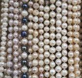 Supporto con le nuove collane delle perle Fotografie Stock