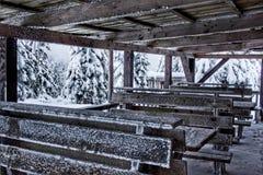 Supporto conico coperto di ghiaccio su un fondo della foresta di inverno Fotografie Stock