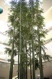 Supporto degli alberi in centro commerciale Fotografie Stock Libere da Diritti