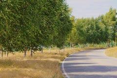 Supporto degli alberi di betulla in alta erba vicino alla strada Fotografia Stock Libera da Diritti