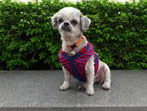 Supporto del cane sul bordo di pietra fotografia stock libera da diritti