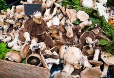 Supporto del mercato con i funghi freschi Fotografia Stock Libera da Diritti