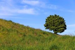 Supporto dell'albero da solo dal lato della collina Fotografia Stock Libera da Diritti