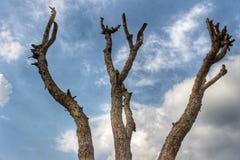 Supporto dell'albero fotografia stock libera da diritti
