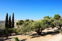 Supporto delle olive Fotografia Stock Libera da Diritti