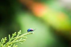 Supporto di camminata della coccinella dell'insetto sulla natura della foglia nel backgr del giardino fotografie stock
