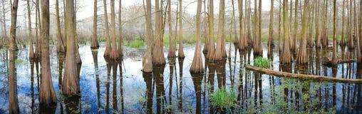 Supporto di Cypress - panoramico immagini stock