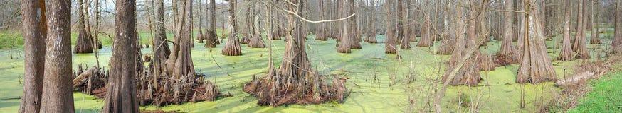 Supporto di Cypress - panoramico fotografia stock