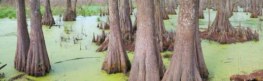 Supporto di Cypress - panoramico fotografia stock libera da diritti