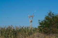 Supporto e cormorani elettrici del cavo della posta Fotografia Stock Libera da Diritti