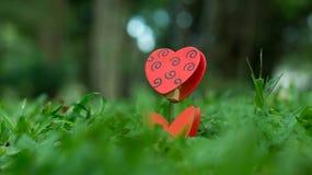 Supporto in forma di cuore della foto sull'erba verde Fotografia Stock Libera da Diritti