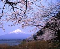 Supporto Fuji Immagini Stock