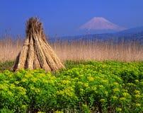 Supporto Fuji Fotografie Stock