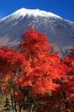 Supporto Fuji nella caduta Immagini Stock