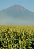 Supporto Fuji nello Iowa Fotografie Stock
