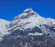 Supporto Hahnen nelle alpi svizzere Fotografia Stock