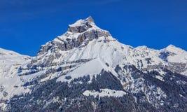 Supporto Hahnen nelle alpi svizzere Fotografie Stock