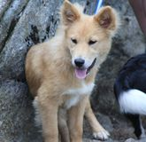 Supporto Mitchell State Park Hiking Puppy immagine stock