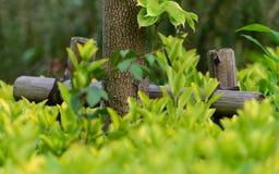 Supporto nel parco, fine dell'albero su Immagine Stock Libera da Diritti