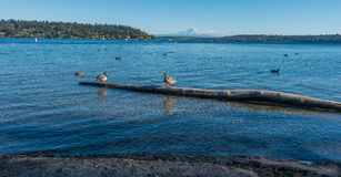 Supporto Rainier And Birds 2 immagine stock libera da diritti