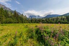 Supporto Robson, paesaggio della montagna - Canada fotografia stock