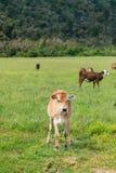 Supporto sveglio del vitello del bambino su vetro verde Immagine Stock Libera da Diritti