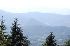 Supporto verde della Toscana del parco immagini stock libere da diritti