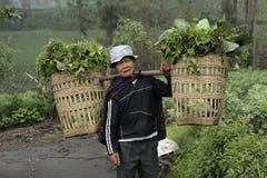 Supporto vicino Bromo dell'agricoltore Immagine Stock