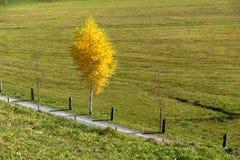 Supporto vicino Rigi, alpi di panorama stupefacente di autunno Fotografia Stock