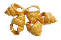Supports de serviette de Seashell images stock