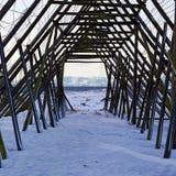 Supports pour sécher le stockfisch en Norvège du nord Photos stock