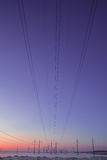 Supports for power lines on sunset sunrise sky background royalty free stock photo