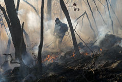 Suppression of Forest Fire 13. Suppression of forest fire by the inspector of protection of the state natural reserve Lazovsky. Russian Far East, Primorye Stock Photo