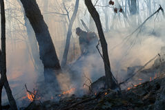 Suppression of Forest Fire 25 Stock Photography