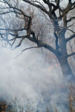 Suppression of forest fire 55 Royalty Free Stock Images