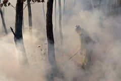 Supresión del incendio forestal   Fotografía de archivo