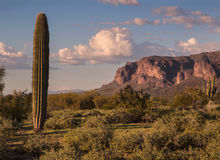 Suprestition Mountains and Saguaro Cactus at Sunset Stock Image