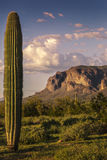 Suprestition Mountains and Saguaro Cactus at Sunset Royalty Free Stock Image