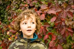 Suprised from autumn. Cute boy in autumnal mood Stock Photo