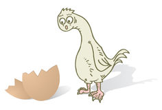 Suprised chicken Royalty Free Stock Photo