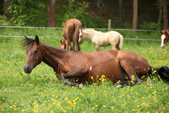 Suprised foal looking at roll around mare Royalty Free Stock Photos