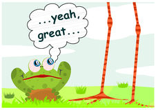 Suprised frog Stock Images