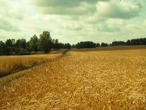 Sur des champs de l'agriculteur photos stock