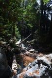 Sur Kalifornien för dunge för redwoodträd för Los-fältprästnationalskog stor - det stupade trädet gör bron över liten vik Royaltyfri Foto
