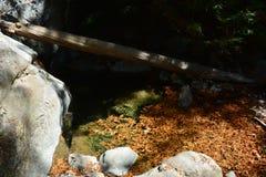 Sur Kalifornien för dunge för redwoodträd för Los-fältprästnationalskog stor - det stupade trädet gör bron över liten vik Fotografering för Bildbyråer