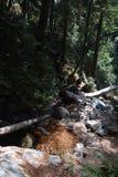 Sur Kalifornien för dunge för redwoodträd för Los-fältprästnationalskog stor - det stupade trädet gör bron över liten vik Royaltyfri Bild