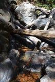 Sur Kalifornien för dunge för redwoodträd för Los-fältprästnationalskog stor - det stupade trädet gör bron över liten vik Arkivbilder