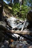 Sur Kalifornien för dunge för redwoodträd för Los-fältprästnationalskog stor - det stupade trädet gör bron över liten vik Royaltyfria Bilder
