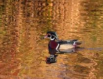 Sur l'étang d'or photos libres de droits